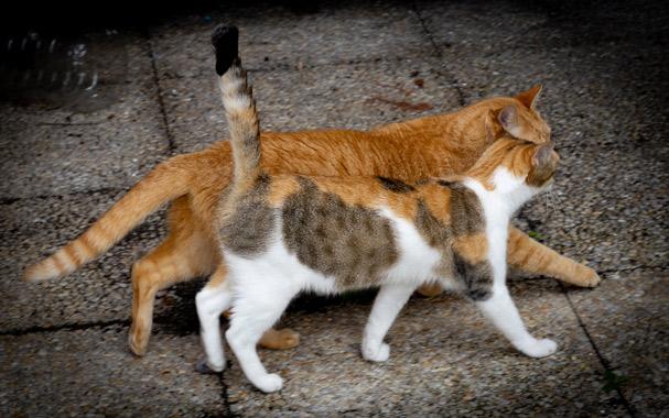 Photo d'un couple de chats lors d'un shooting animalier à Montlouis sur Loire